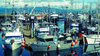 Port avec bateaux de pêche