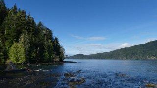 Payasage mer et forêt